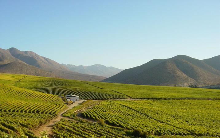 Terremoto no Chile não afeta vinícolas