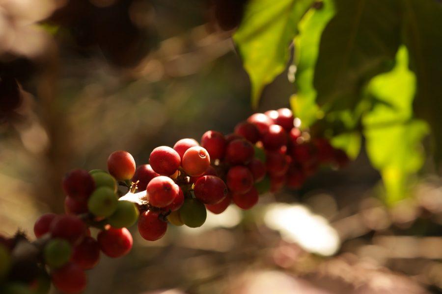 Vinícola Guaspari lança café premium