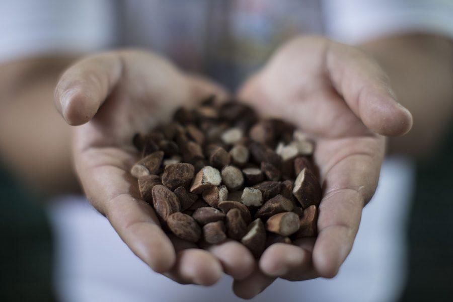 Loja virtual valoriza pequenos produtores do Cerrado e da Caatinga