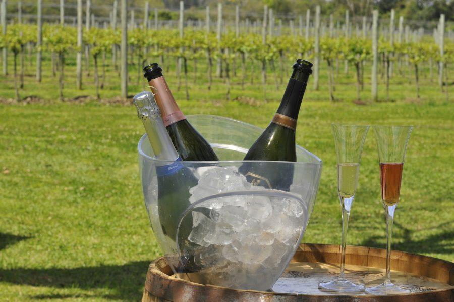 Aprenda sobre vinhos em experiência que mescla o físico e o virtual